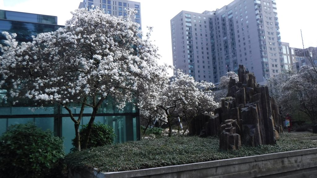 spring in seattle