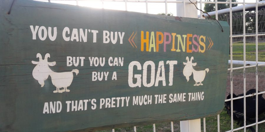goat yoga sign