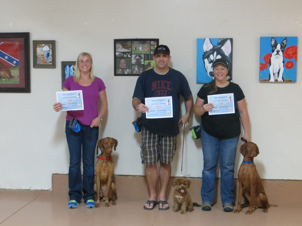 dogs in an obedience class