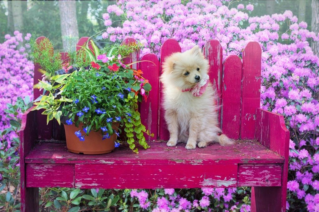 Dog on a bench with flowers