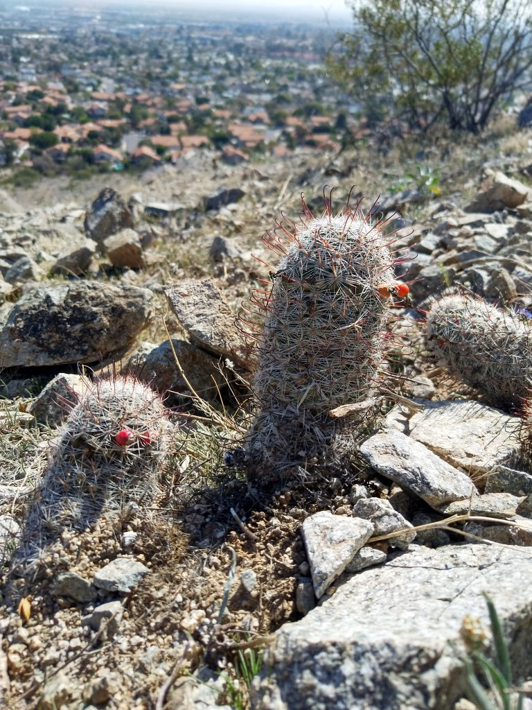 Cacti in the desert- example of habituation